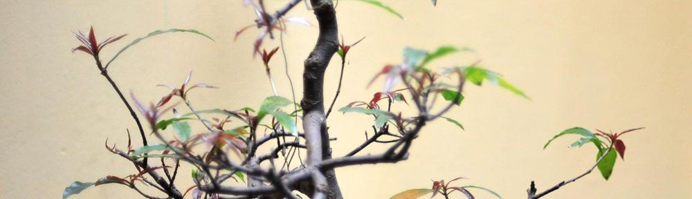 REMAX Little Oak
